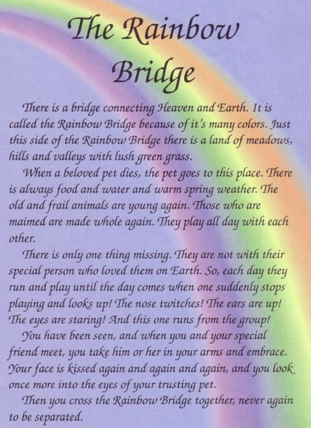 Critter-Rainbow Bridge