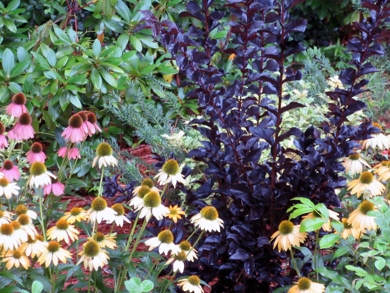 Web Garden closeup